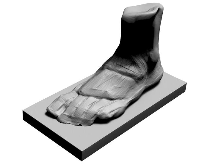 广州校考画室速写教程:脚的肌肉与骨骼